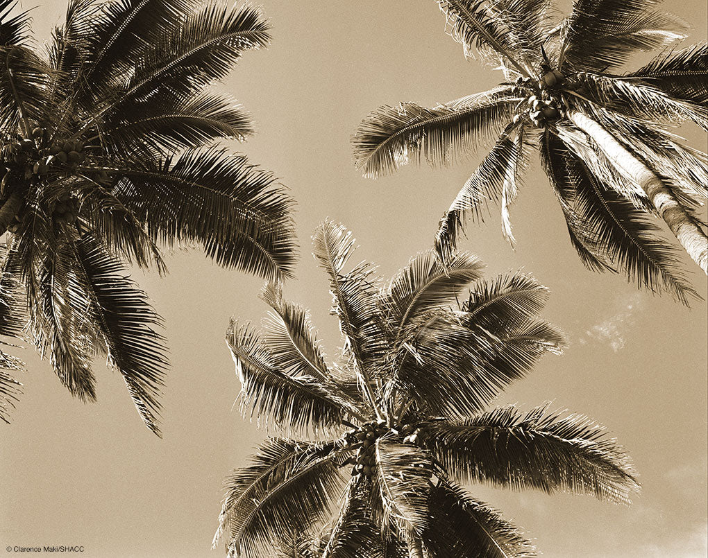 Three Palms • Clarence Maki Collection