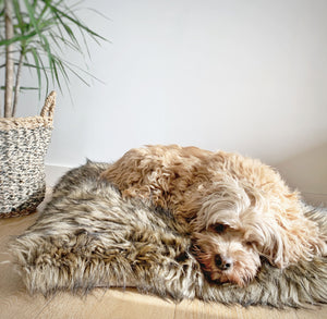 NEW! Sabi Doggie Bed