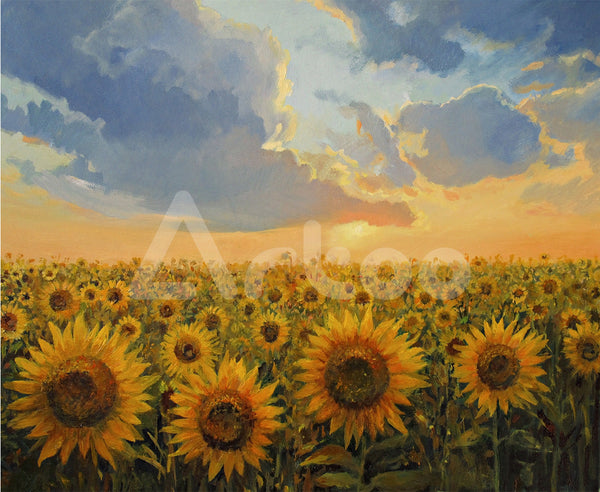 陽光向日葵  Sunflower field in the light of the sunset