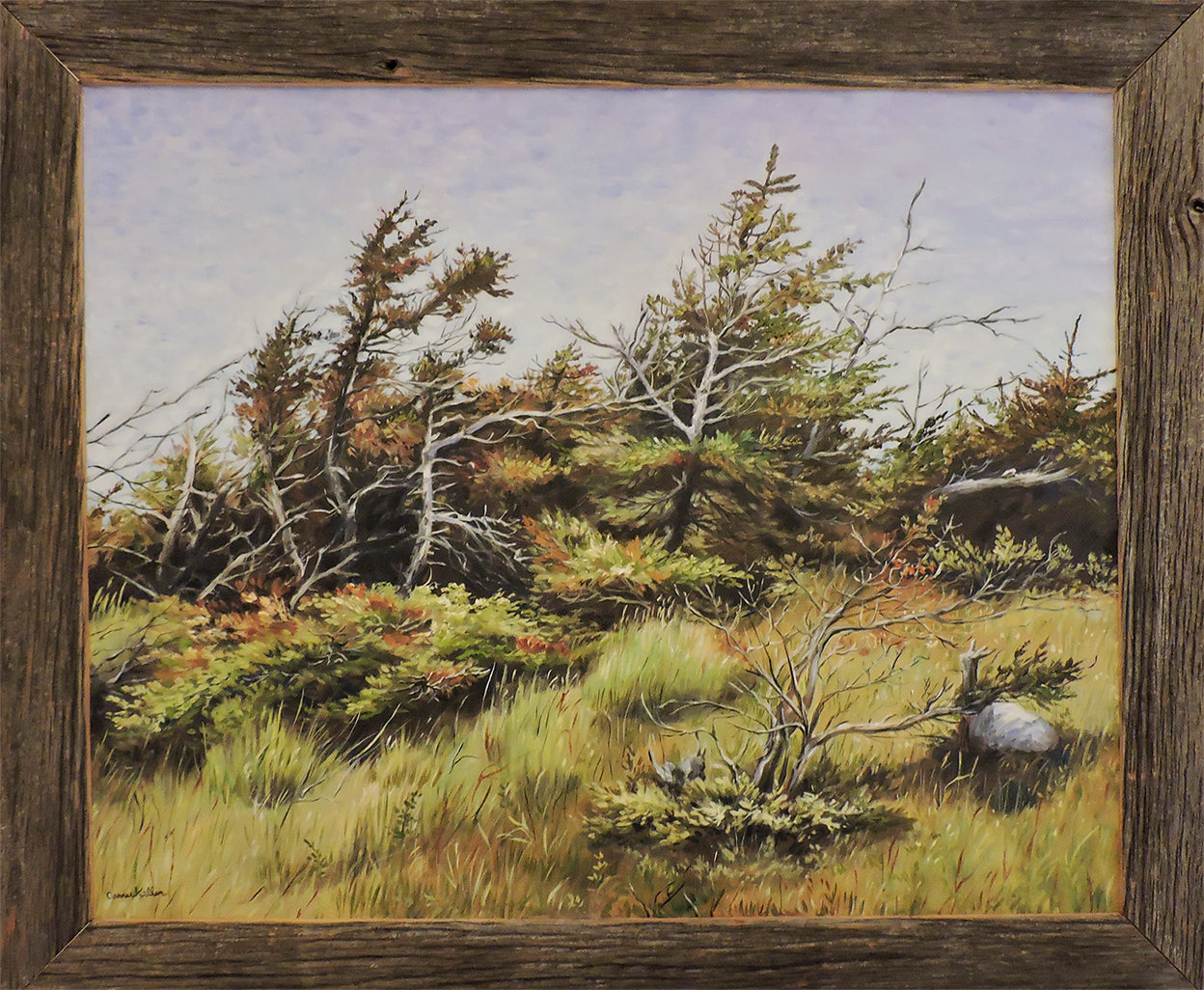 Newfie Shore Trees - Oil on Canvas Framed