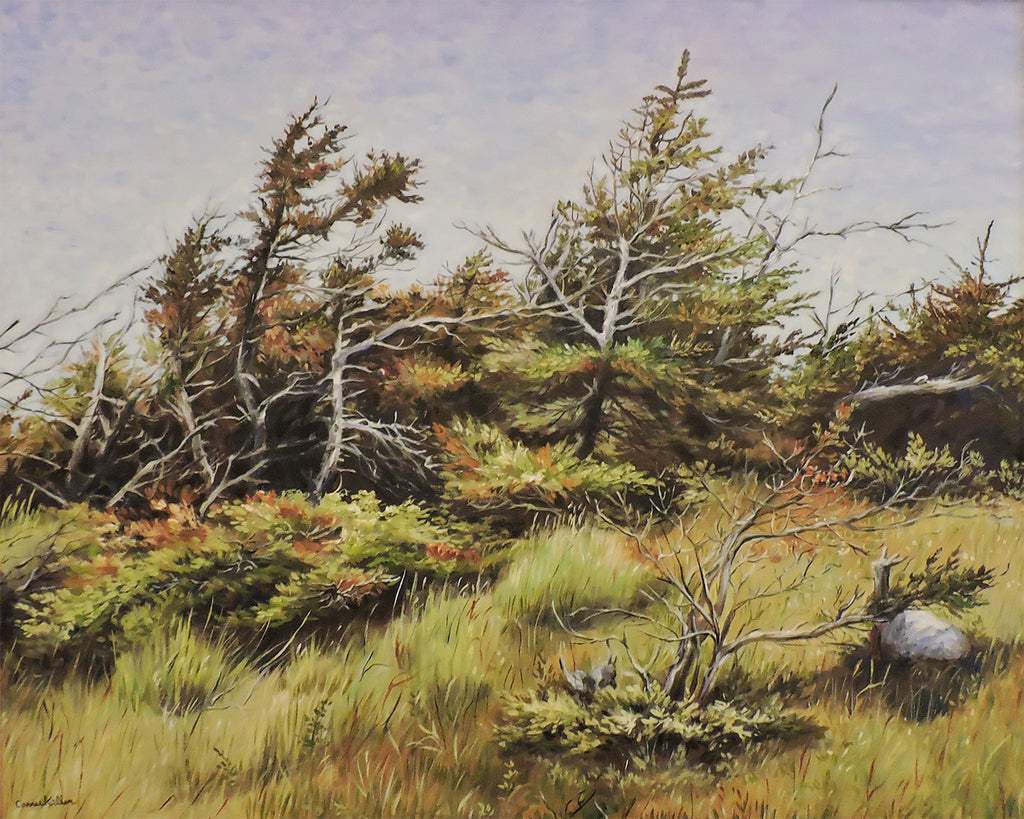 Newfie Shore Trees - Oil on Canvas