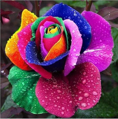 150 Rainbow Rose Seeds- [variant_title]