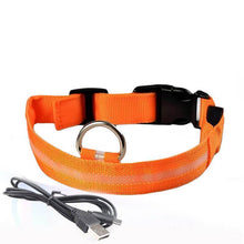 Load image into Gallery viewer, Led Dog Collar | Safety Light Up Dog Collar | USB Rechargeable- S / Orange