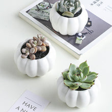 Load image into Gallery viewer, Niveau Succulent Display Set