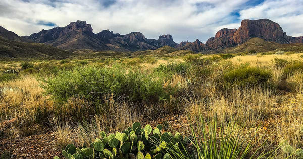 Best Things To Do in Big Bend National Park