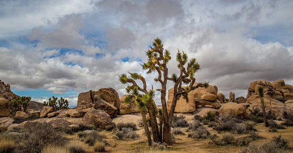 Celebrate Joshua Tree National Park's Anniversary October 31