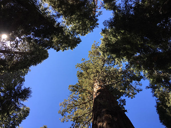 Celebrate Sequoia National Park's Anniversary September 25th