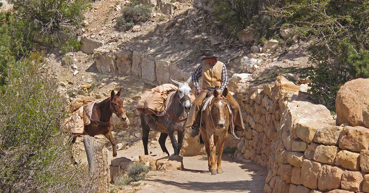 Mule Trip, Grand Canyon National Park