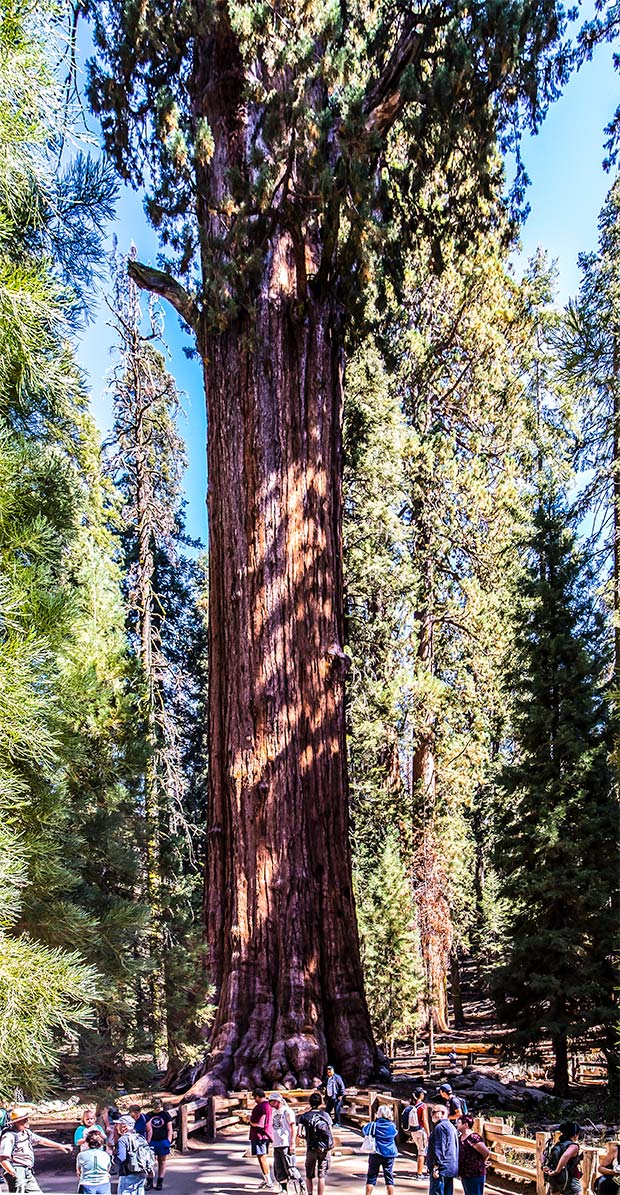 General Sherman Tree, Sequoia National Park | National Park Posters