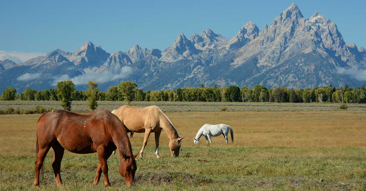 Horseback Riding, Grand Teton National Park
