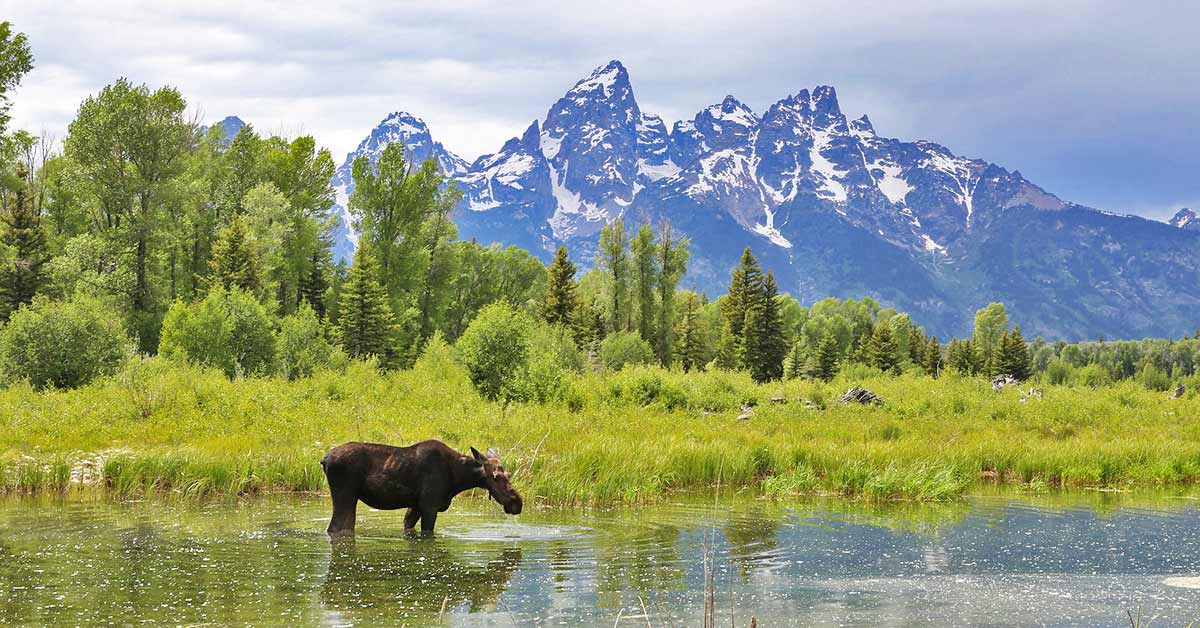 Grand Teton National Park | National Park Posters