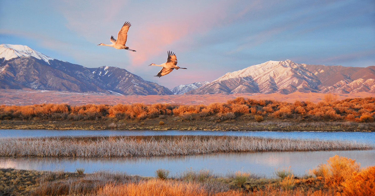 Great Sand Dunes - Sandhill Cranes | National Park Posters