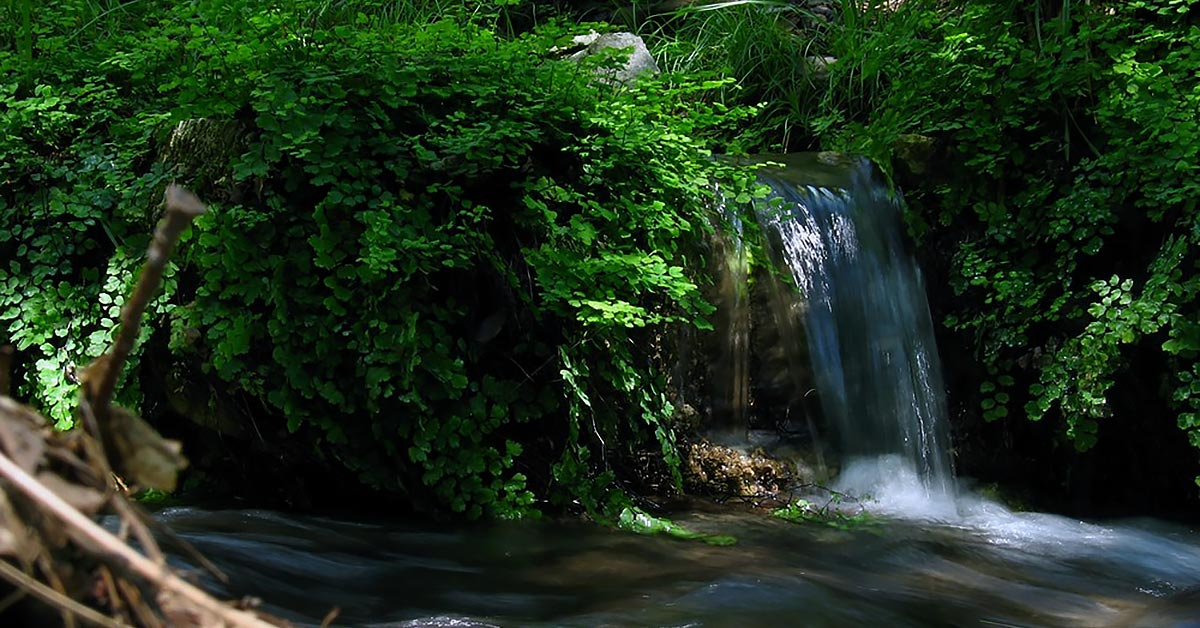 Guadalupe National Park | Smith Spring