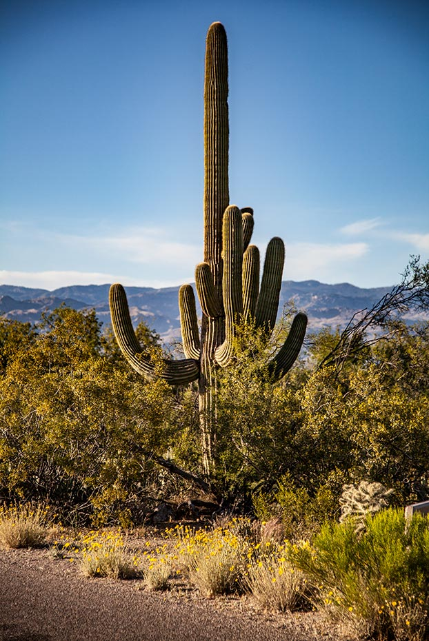 Rincon Mountain District, Saguaro National Park | National Park Posters