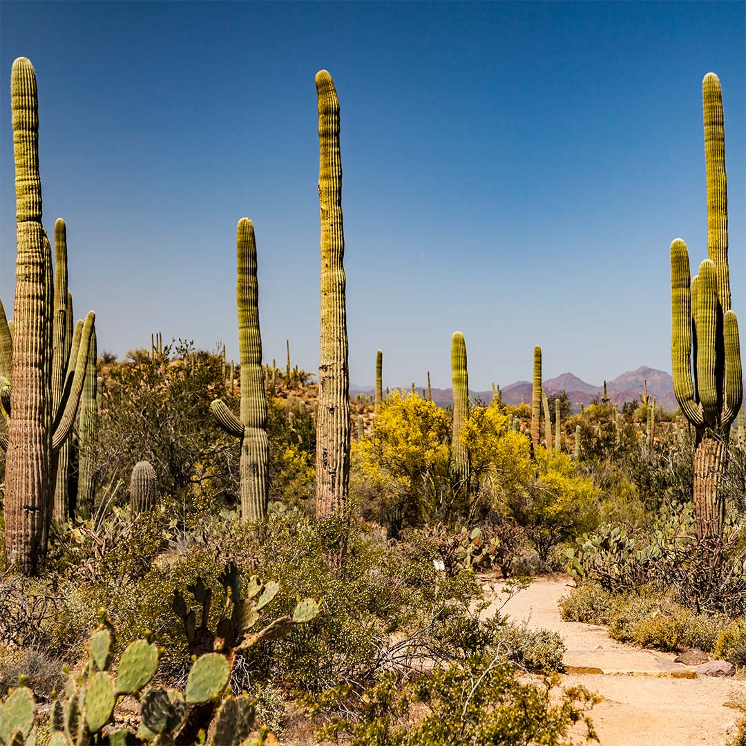 Saguaro National Park, Tucson Mountain District | National Park Posters