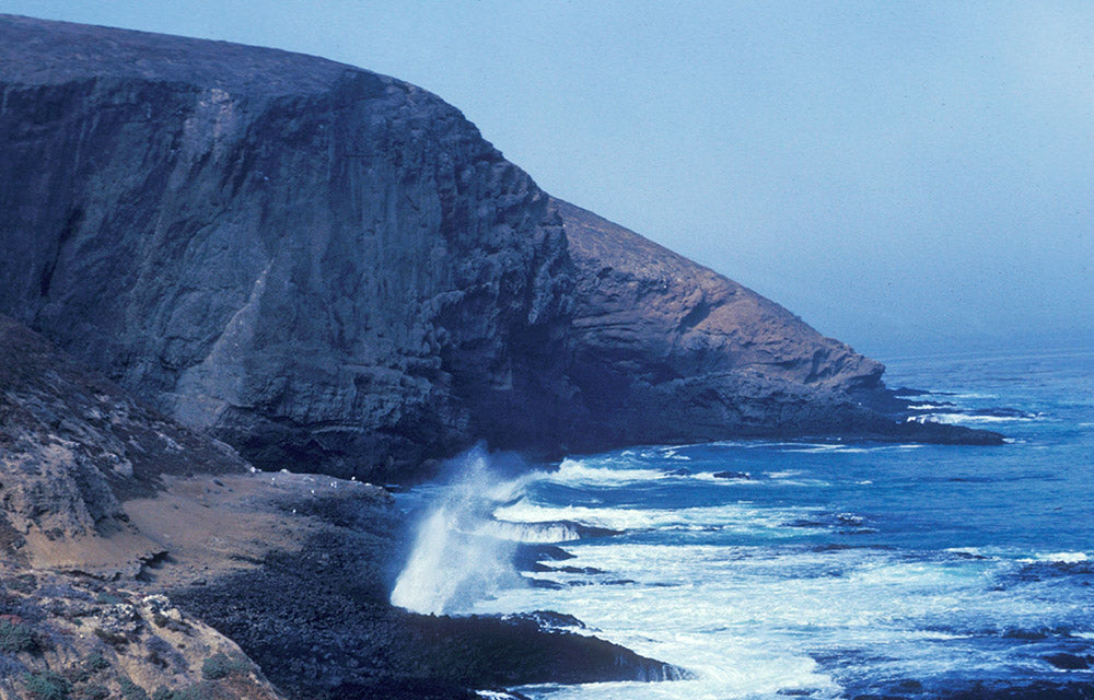 Sea Lion Rookery | Channel Islands National Park