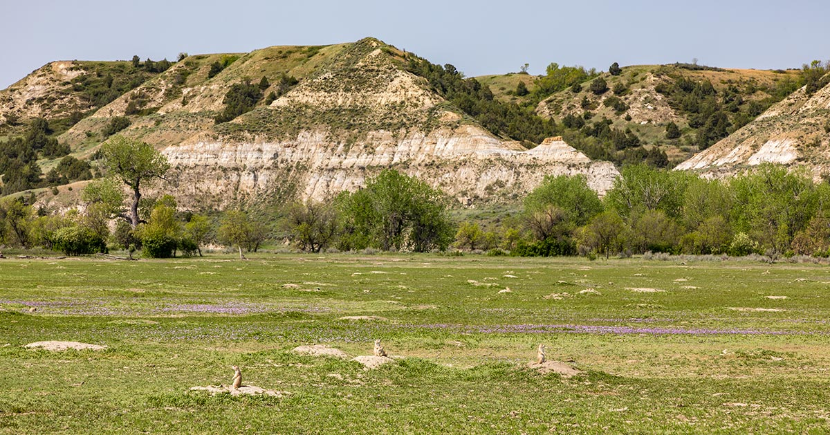 Prairie Dog Town, Theodore Roosevelt National Park | National Park Posters