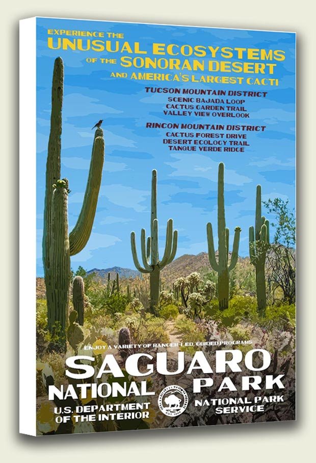 Saguaro National Park Canvas Print