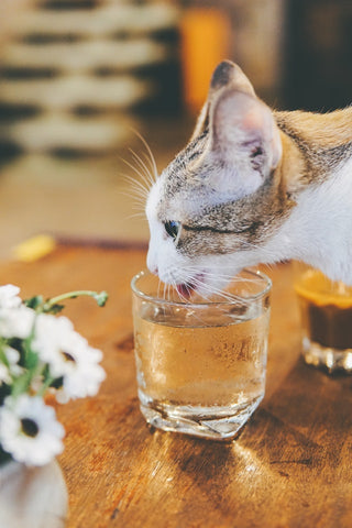 why is my cat not drinking water?