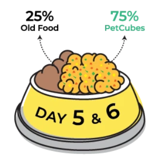Day 5 & 6 of transitioning to Petcubes