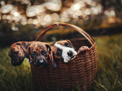 highest carb content for puppies