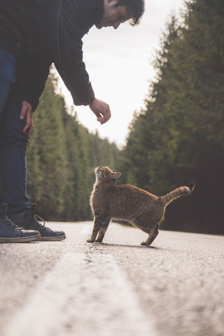 take your cat for a walk