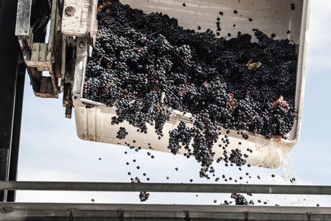 Grapes are dropped into the press.