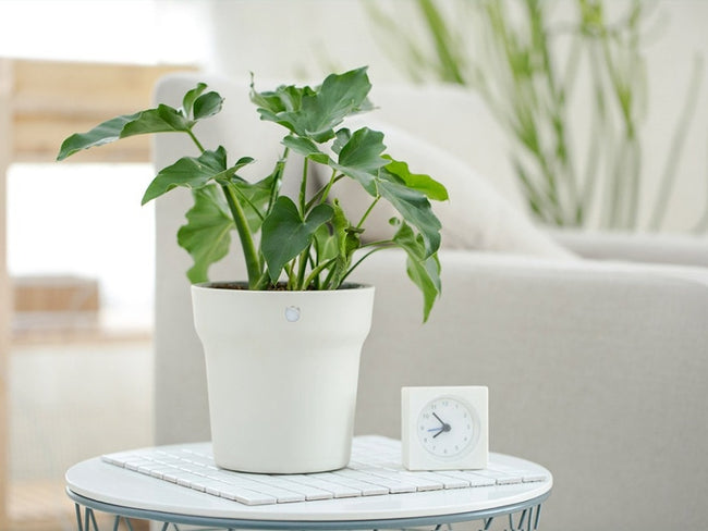 Xiaomi Mi Flora Smart Flower Pot - geex-shop