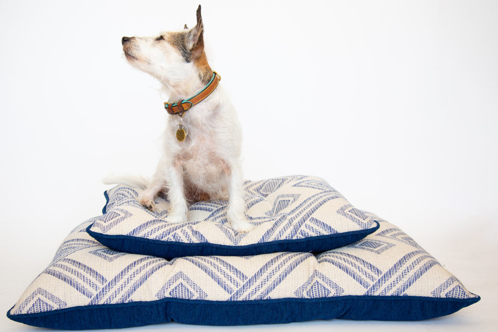jack russell terrier, dog beds