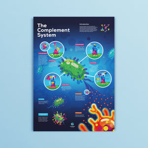 Complement System Poster