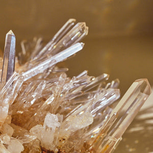Gold Needle Lemurian Seed Quartz | Cluster