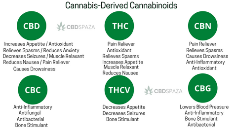 CBDSpaza.com - Cannabis-derived cannabinoids Benefits