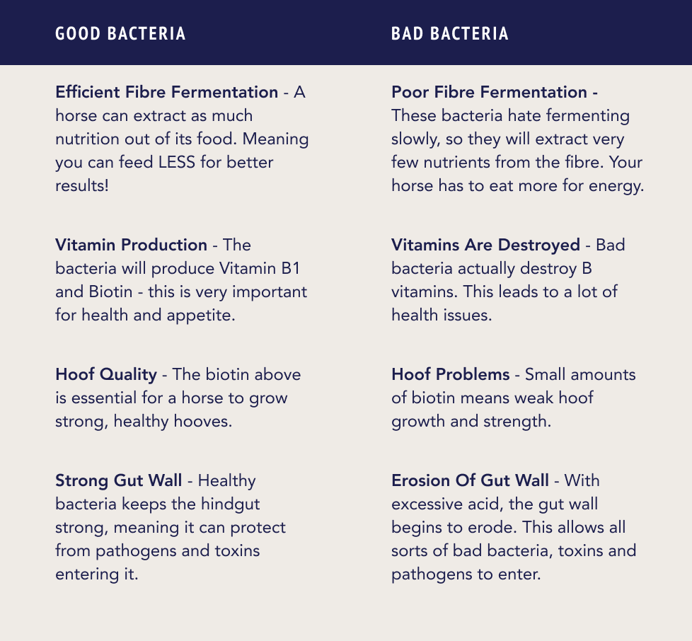 Good vs. Bad Bacteria