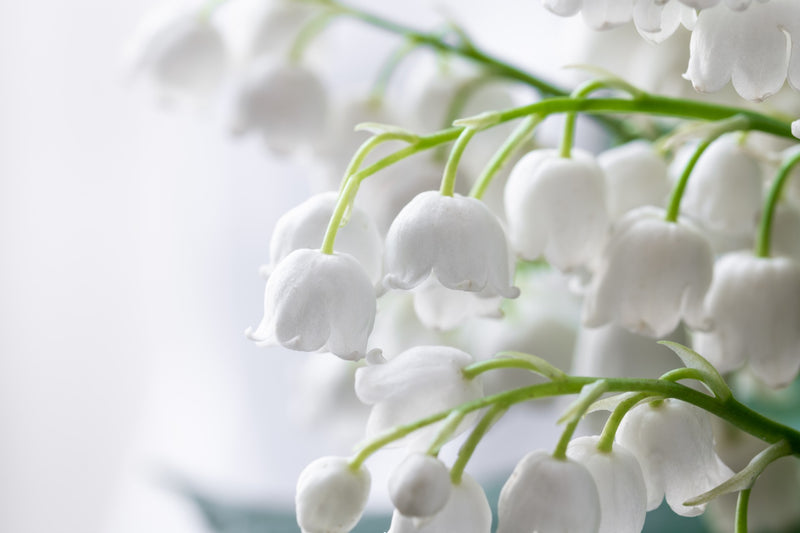 Feature Flower Lily of the Valley - from Garden of Eden Flower Shop