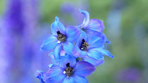 Feature Flower Friday: Delphinium
