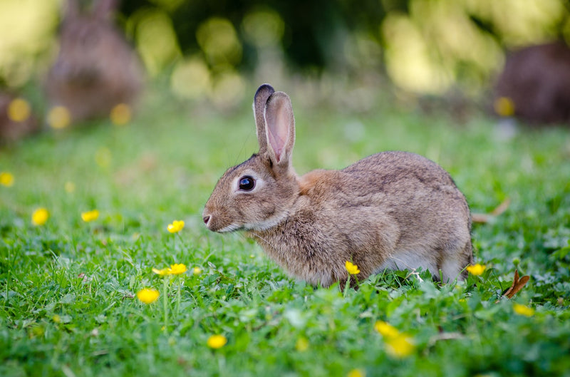 Tip of the Week: Keeping Rabbits Out