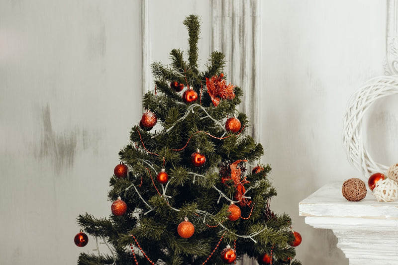 Tip of the Week: Keeping Christmas Trees Fresh