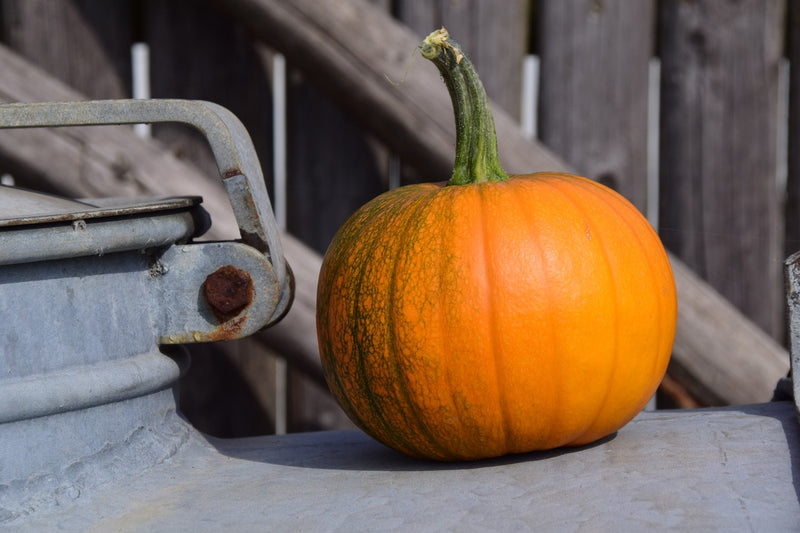 Tip of the Week: Pumpkin Protection