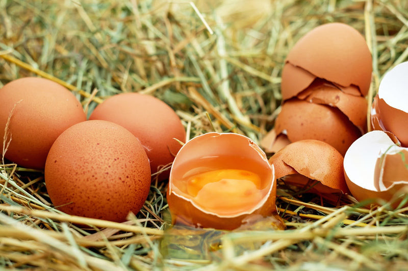 Tip of the Week: On Eggshells