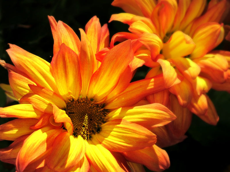 Garden of Eden Flower Shop Tip of the Week: Mums the Word
