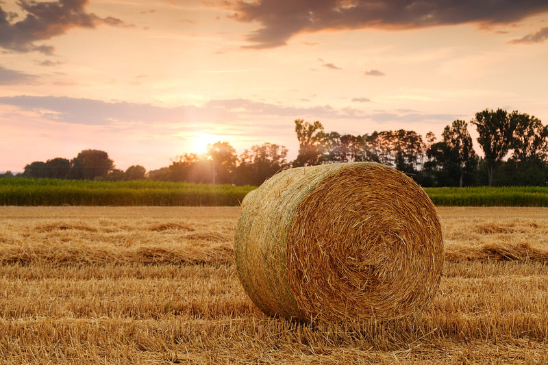 Tip of the Week: Straw Bales