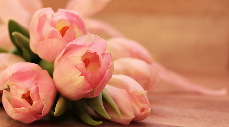Feature Flower Friday: Tulips