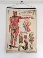 Educational anatomical poster - eyespy