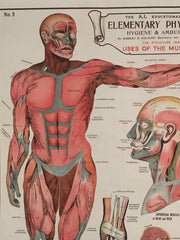 Educational anatomical poster