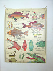 Large vintage 60s school educational poster
