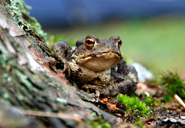 That's MR Toad!