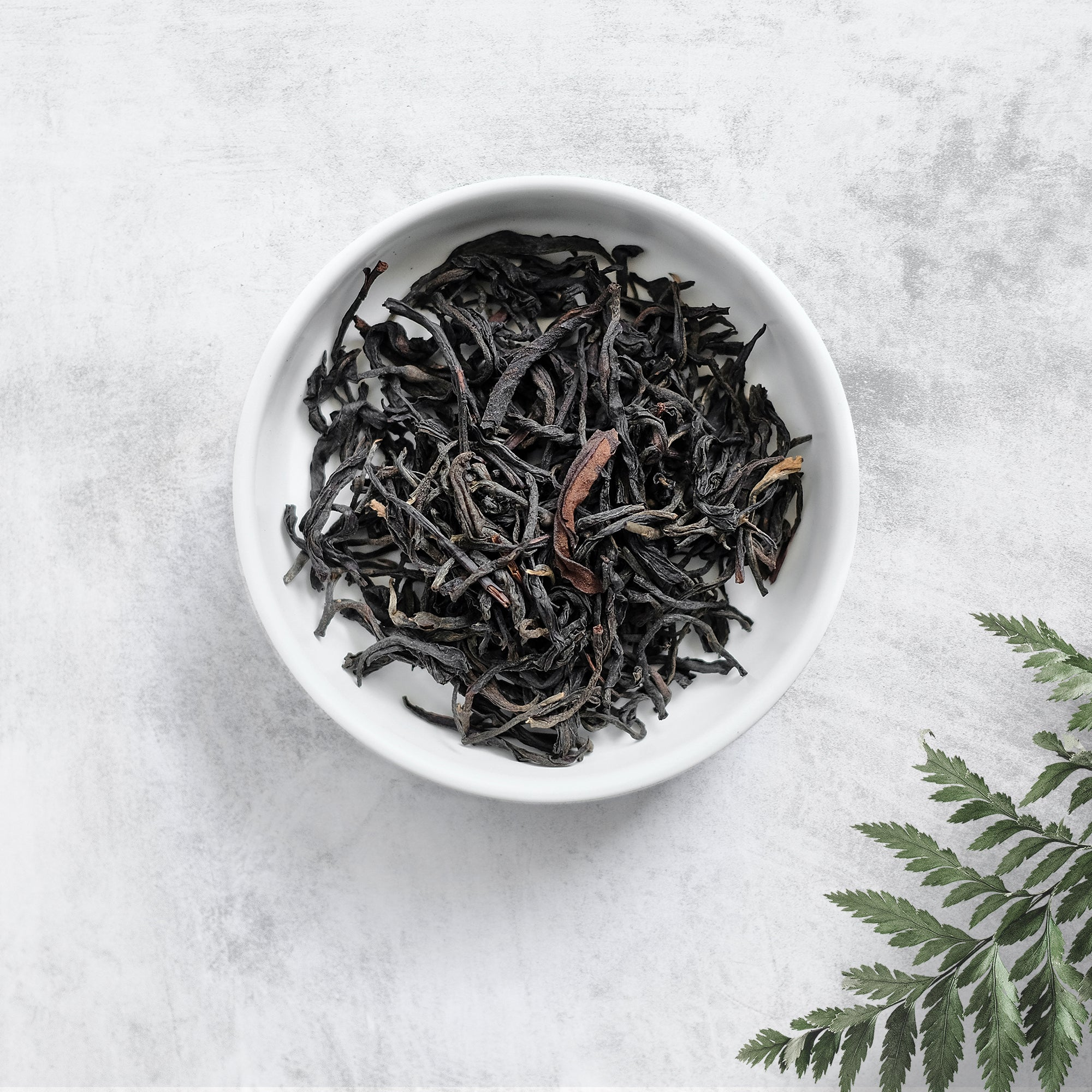 Cloudy Mountain Oolong - MERAKI