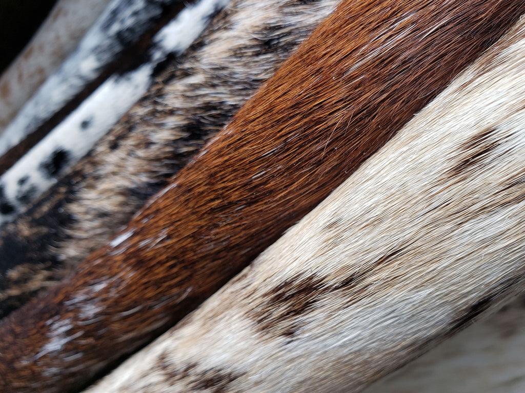 Top Notch Brazilian Cowhides - Actual Pictures