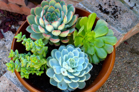 Sensational Succulents Galore - The Succulent Garden - Unique Holiday Gift