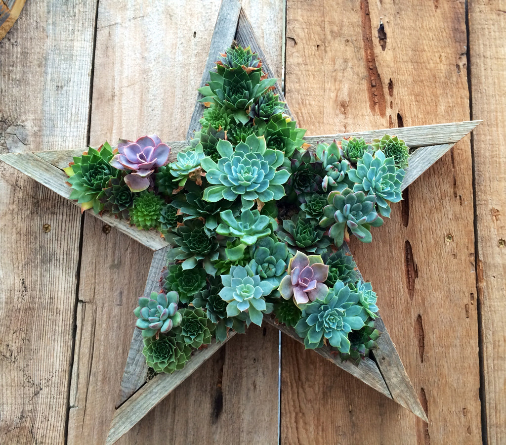 handmade star living succulent frame wooden framed vertical garden planter beautiful mothers day gift